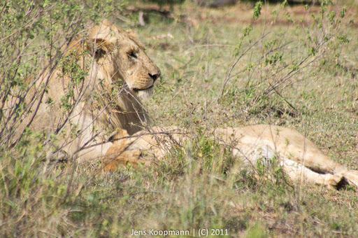 Kenia_20110816_05015