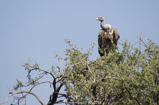 Kenia_20110816_05060