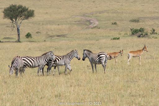 Kenia_20110816_05069