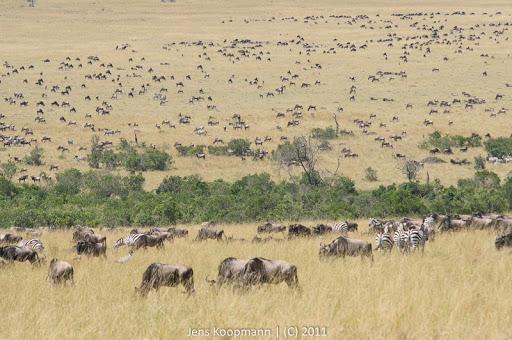 Kenia_20110816_05093