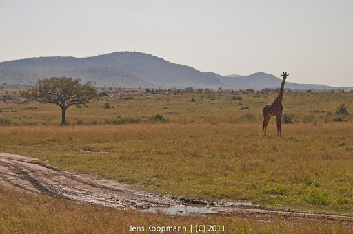 Kenia_20110816_1764