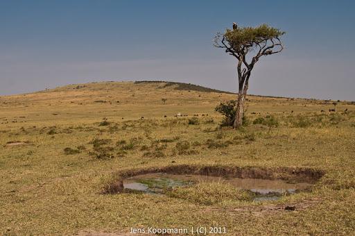 Kenia_20110816_1776