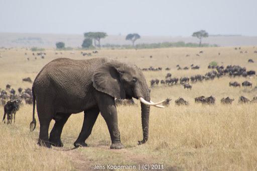Kenia_20110816_05117