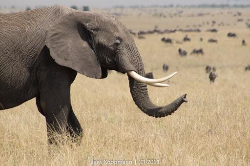 Kenia_20110816_05142