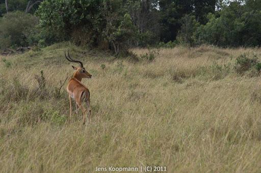 Kenia_20110816_05255