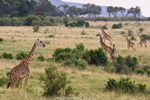 Kenia_20110816_05336