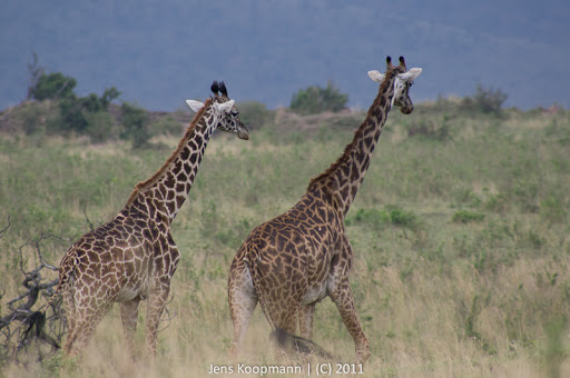 Kenia_20110816_05355