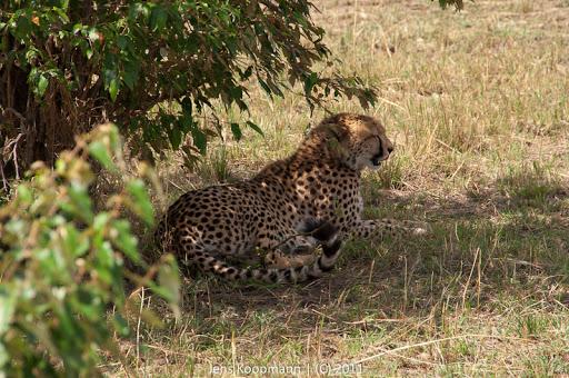Kenia_20110816_1859