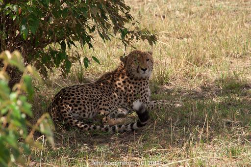 Kenia_20110816_1860