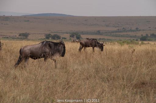 Kenia_20110816_1897
