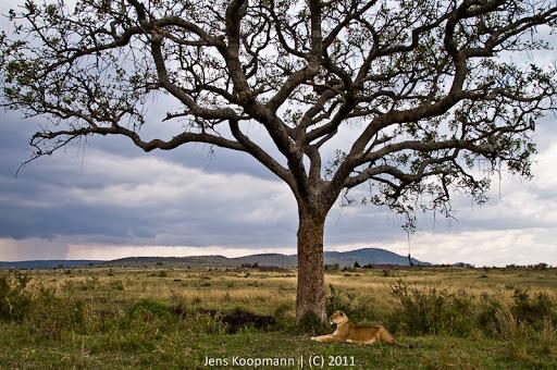 Kenia_20110816_1930