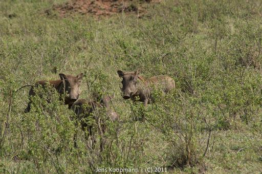 Kenia_20110817_05497
