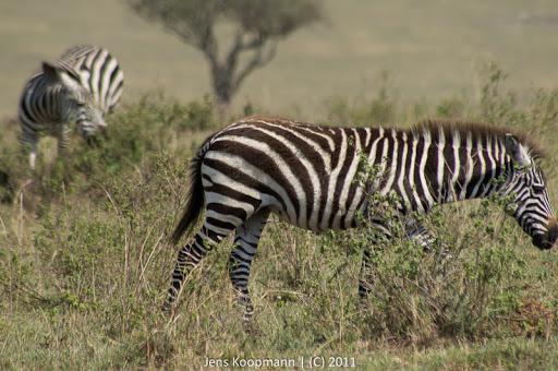 Kenia_20110817_05507