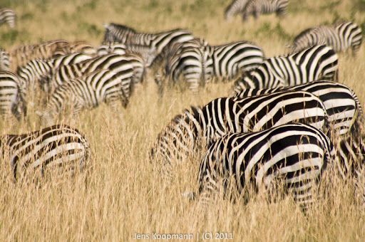 Kenia_20110817_05520