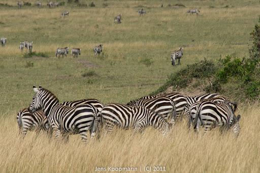 Kenia_20110817_05525