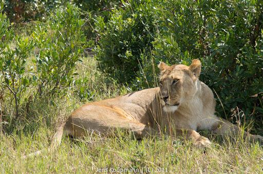 Kenia_20110817_05544