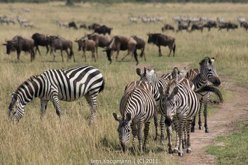 Kenia_20110817_05548