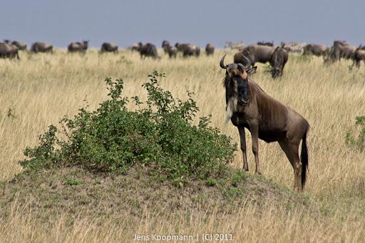 Kenia_20110817_05549