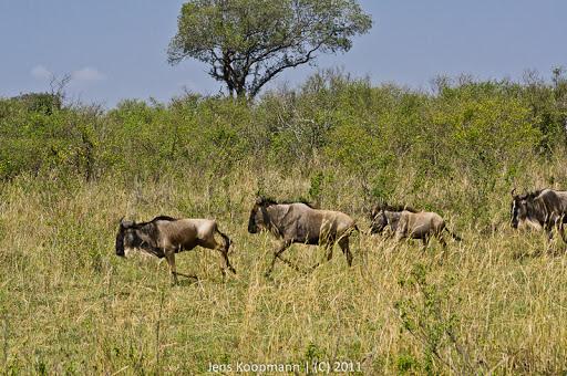 Kenia_20110817_05575