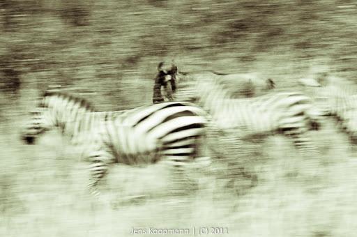 Kenia_20110817_05649