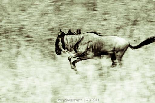 Kenia_20110817_05663