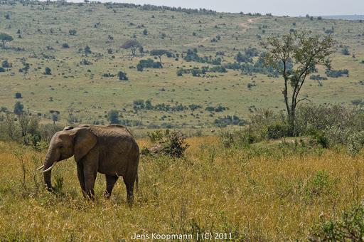 Kenia_20110817_05679