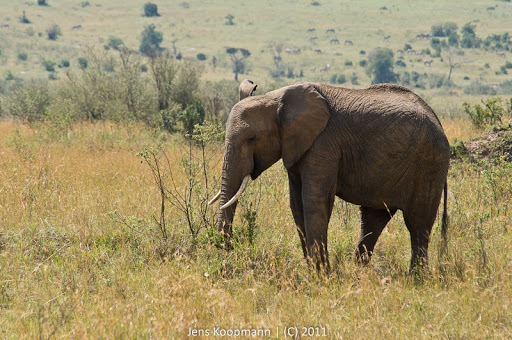Kenia_20110817_05682
