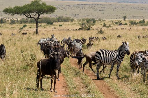 Kenia_20110817_05701