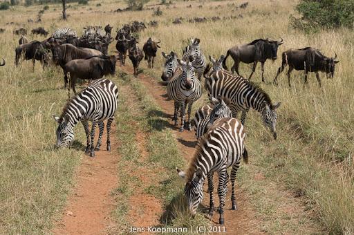 Kenia_20110817_05712