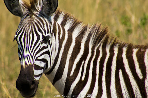 Kenia_20110817_05718