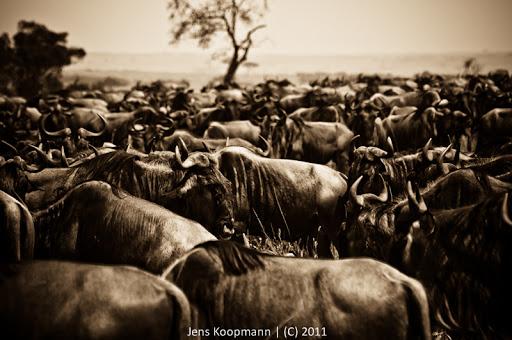 Kenia_20110817_05769
