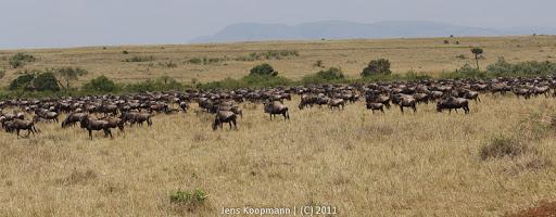 Kenia_20110817_05773
