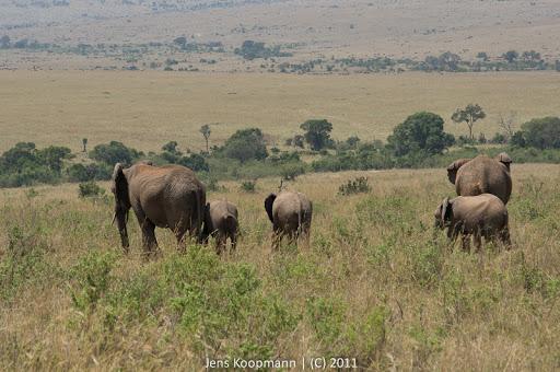 Kenia_20110817_05779