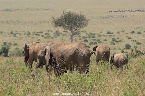 Kenia_20110817_05789