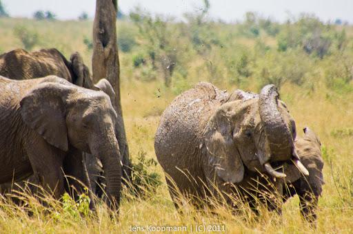 Kenia_20110817_05831