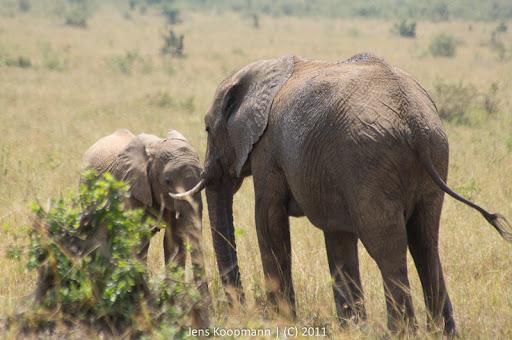 Kenia_20110817_05841