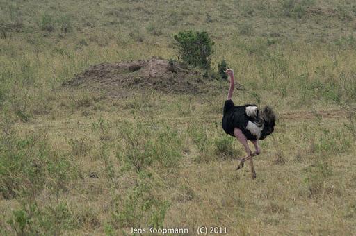 Kenia_20110817_05870