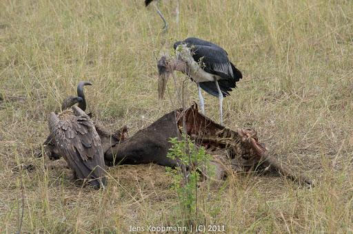 Kenia_20110817_05875