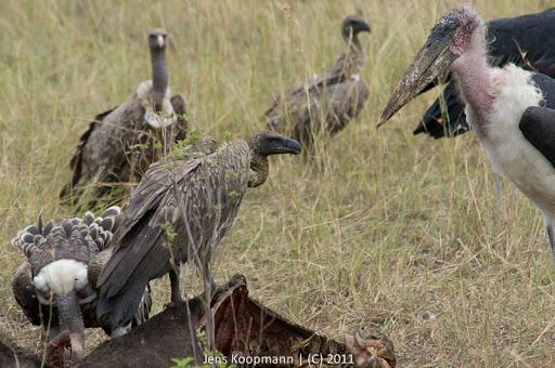 Kenia_20110817_05880