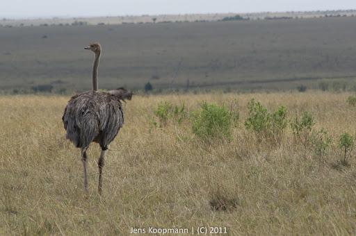 Kenia_20110817_05895