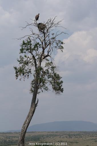 Kenia_20110817_05912