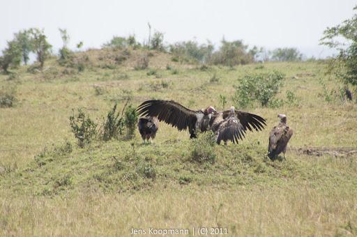 Kenia_20110817_05924