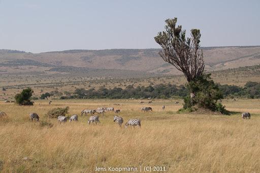 Kenia_20110817_1953