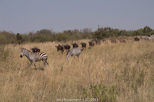 Kenia_20110817_1995