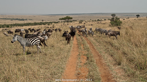 Kenia_20110817_2001