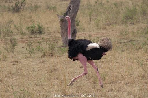 Kenia_20110817_2051