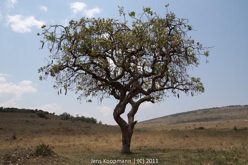 Kenia_20110817_2052