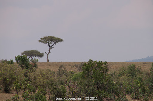 Kenia_20110817_2097