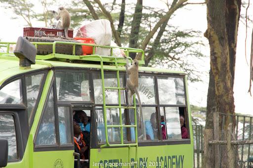 Kenia_20110818_06069