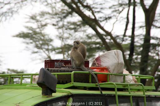 Kenia_20110818_06070